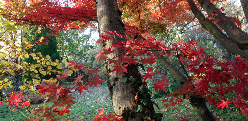 arboretum robert ruffier-lanche